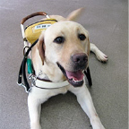 身体障害者補助犬貸付希望者を募集しています