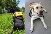 身体障害者補助犬貸付希望者を募集
